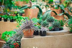 Cactus plant in the garden naturally. Stock Photos