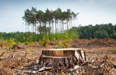 Woods logging and stump of deforestation hack - stock photo