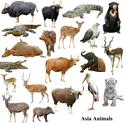 Stock Illustration of asian animals collection isolated on white background