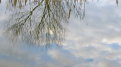 Tree and sky reflection on the surface of the pond. Stock Footage