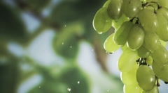 Washing a bunch of fresh healthy green grapes Stock Footage