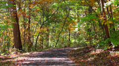 Path in Woods with Leaves Changing Color Stock Footage