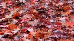 Wet Autumn Leaves on Ground Stock Footage