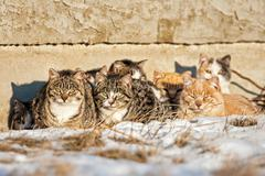 Feral cats Stock Photos