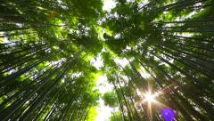 Sagano bamboo forest, kyoto japan Stock Footage