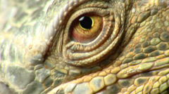 Lizard Eye Macro Shot - stock footage