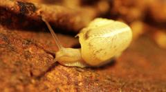 White snail #4 Stock Footage