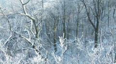 4K Ice and Snow on Tree Branches 3 Stock Footage