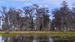 Swamps of Louisiana 4031 Stock Footage