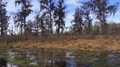 Bald Cypress Trees 4034 Stock Footage