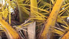 Palm tree pan up, man in Sillouette walking, Setubal - stock footage