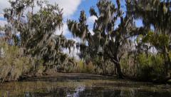 Trees in a Swamp in Louisiana 4019 - stock footage