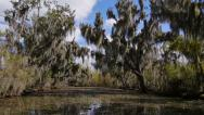 Stock Video Footage of Trees in a Swamp in Louisiana 4019