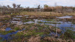 The Swamps of Louisiana 4022 Stock Footage