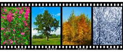 Nature seasons in film frames (my photos) - stock photo