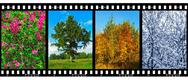 Stock Photo of Nature seasons in film frames (my photos)