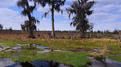 The Swamplands of Louisiana as Seen from a Speeding Boat Stock Footage