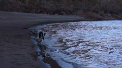 DOG RUNNING ON THE SHORE LINE OF A SANDY RIVER IN THE DESERT Stock Footage