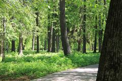 Old park in summer. Stock Photos