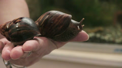 Giant African Snail Stock Footage