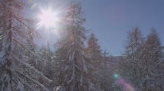 AERIAL: Winter trees covered in snow Stock Footage