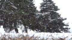 Winter Village - 09 - Close Grass and Far Pines In Heavy Snowfall - stock footage