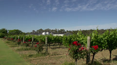 A slow Pan of a wine garden at Margaret River, Western Australia Stock Footage