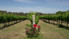A slow Pan of a wine garden at Margaret River Stock Footage