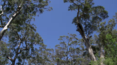 Pan from margaret river forest, Western Australia Stock Footage