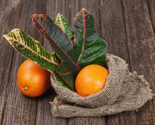 still life with oranges on wooden table. - stock photo