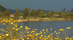 Stock Video Footage of 0599  Flowers on the bank of river