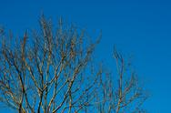 Stock Photo of tree branches against clear blue sky background.