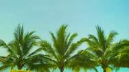 Stock Video Footage of blue sky above the tops of coconut trees on a tropical beach