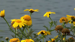 0598   Flowers on the bank of river Stock Footage