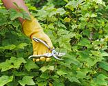 Stock Photo of hand with green pruner in the garden.