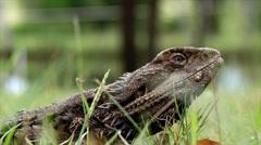 Monster Lizard Stock Footage