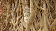 Stock Video Footage of stone face buried in the roots of a tree. thailand, ayutthaya