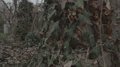 Old haunted cemetery [flycam] _2 Stock Footage
