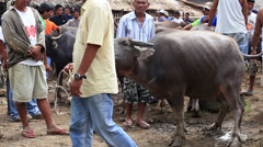 Animals market in the island of Negros. Stock Footage