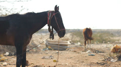 Horses on a Wasteland - stock footage