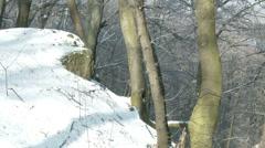 4K Winter Forest Hills Landscape 6 Stock Footage