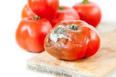 Ripe toxic moldy tomato and good fresh fruits Stock Photos