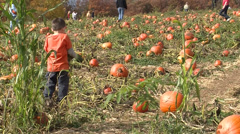 Children and families picking pumpkins Stock Footage