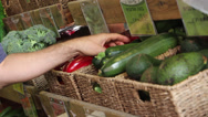 Stock Video Footage of Zucchini in the market