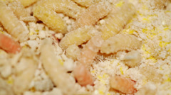 Fly maggots - extreme closeup Stock Footage