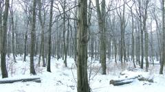 4K Winter Forest Landscape 3 Stock Footage
