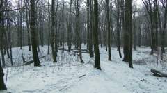 4K Winter Forest Landscape 7 Stock Footage