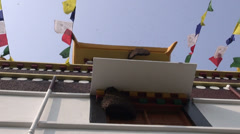 Wild bee on buddhist temple in Lumbini, Nepal Stock Footage