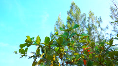 Green leaves in a tropical climate - stock footage