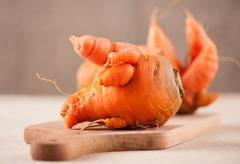 Fresh raw deformed carrot roots - stock photo